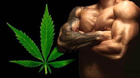 Marihuana und Steroide